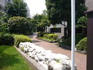 大井町ハイツ 立会道路