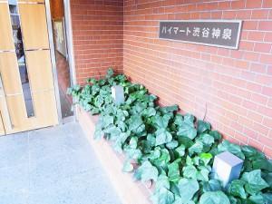ハイマート渋谷神泉  エントランス