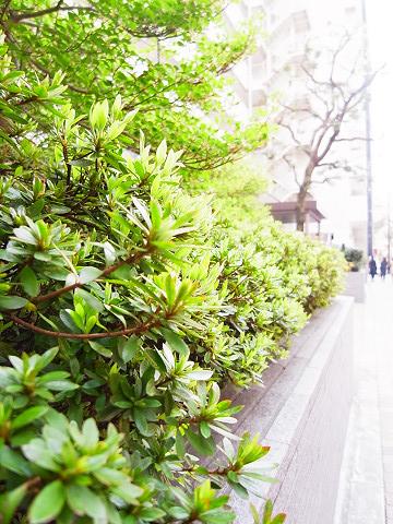 チュリス西麻布 植栽