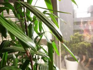 マンション雅叙苑 エントランスの植物