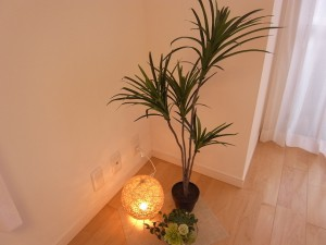 市ヶ谷ホームズ 植物