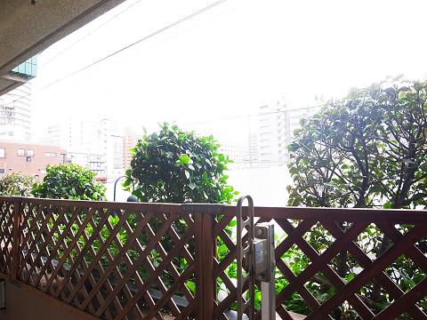 新宿御苑サニーコート 眺望