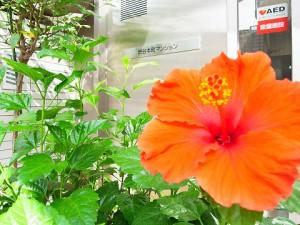 渋谷本町マンション  エントランス