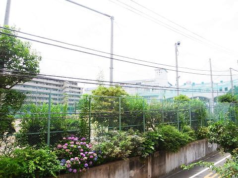 千歳船橋サマリヤマンション 南眺望