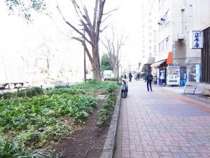 ライオンズマンション小石川植物園 周辺