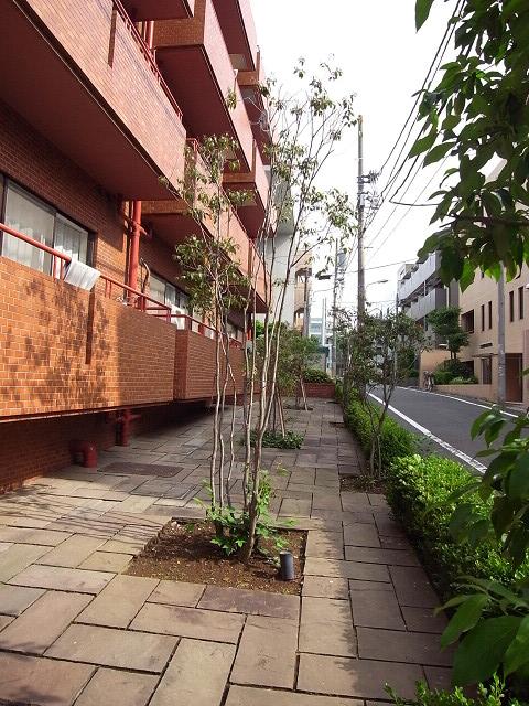 ソフトタウン原宿 草木
