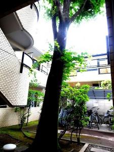 タウンハイツ駒沢
