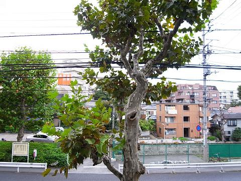 アールヴェール新宿弁天町 眺望
