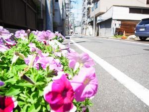 戸山マンション 道端