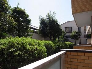 エクセル柿の木坂  眺望