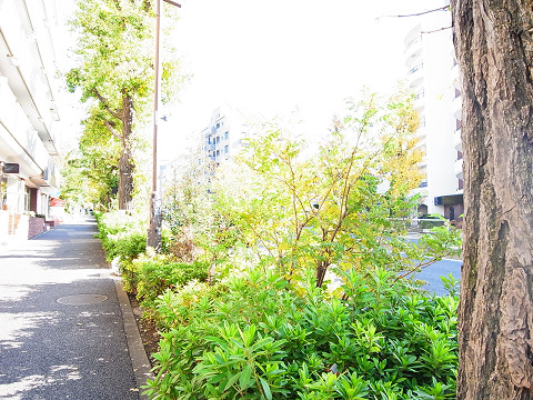 ライオンズマンション柿の木坂